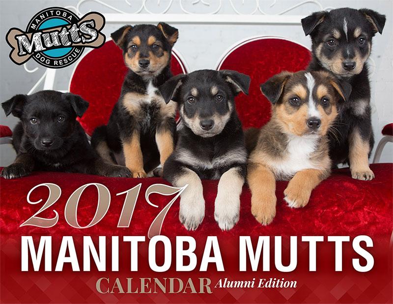 2017_calendar_cover