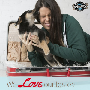 Focus on Fosters