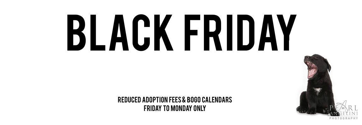 black-friday-mutts