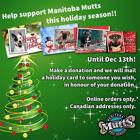 Holiday Card Fundraiser