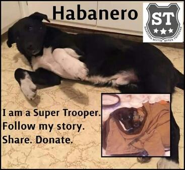 Super Trooper Program