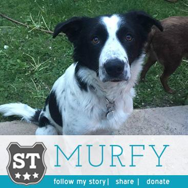 Murfy