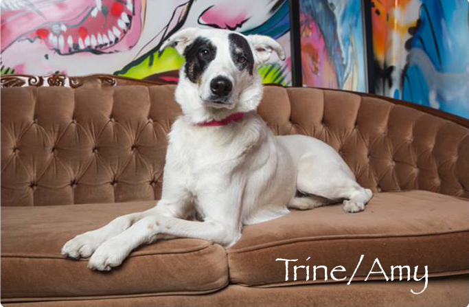Trine/Amy