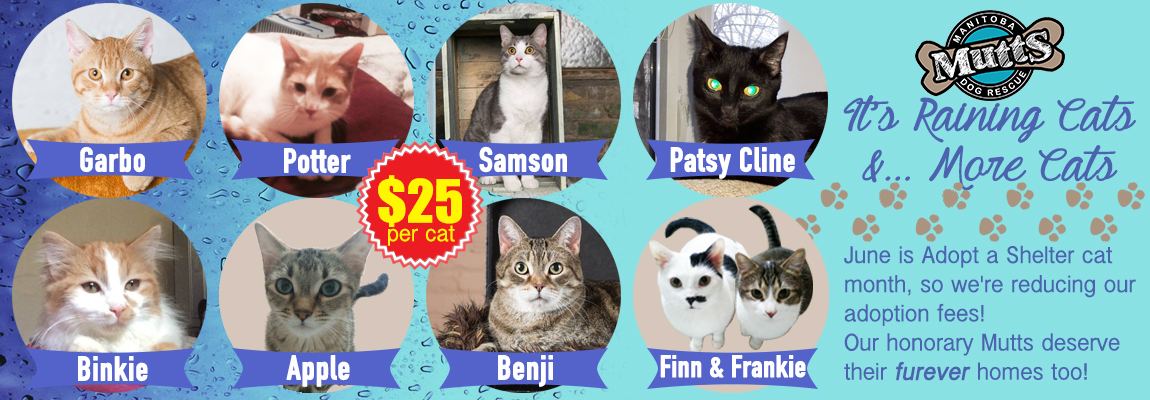 Cat-Promo-Poster