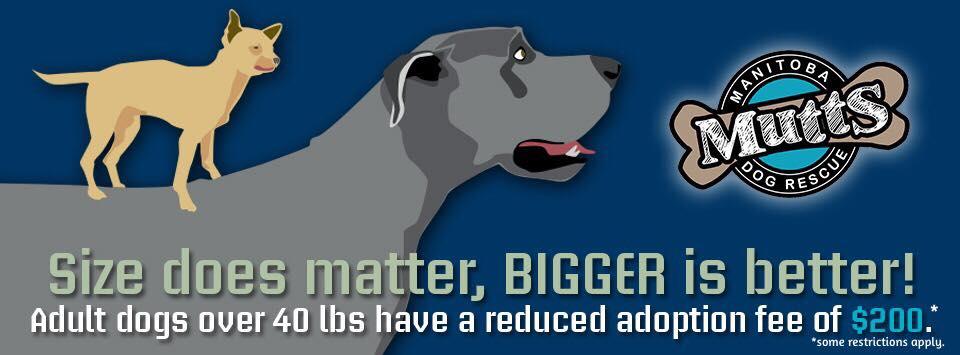 Bigger-is-Better-Promo