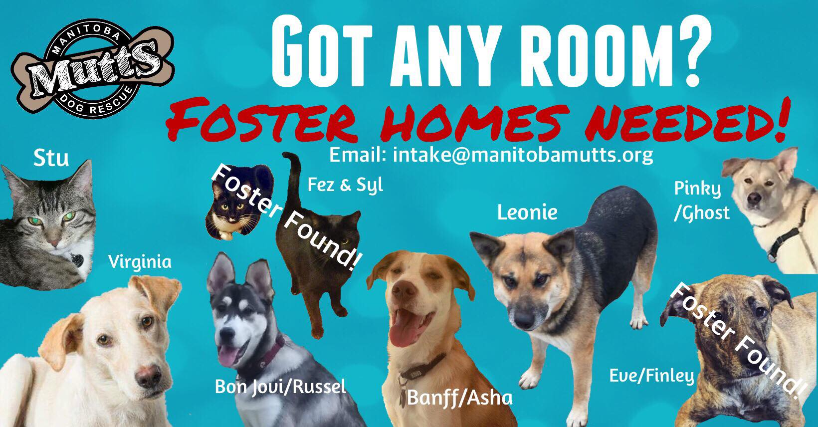 Foster-Homes-Needed-Jan-2018