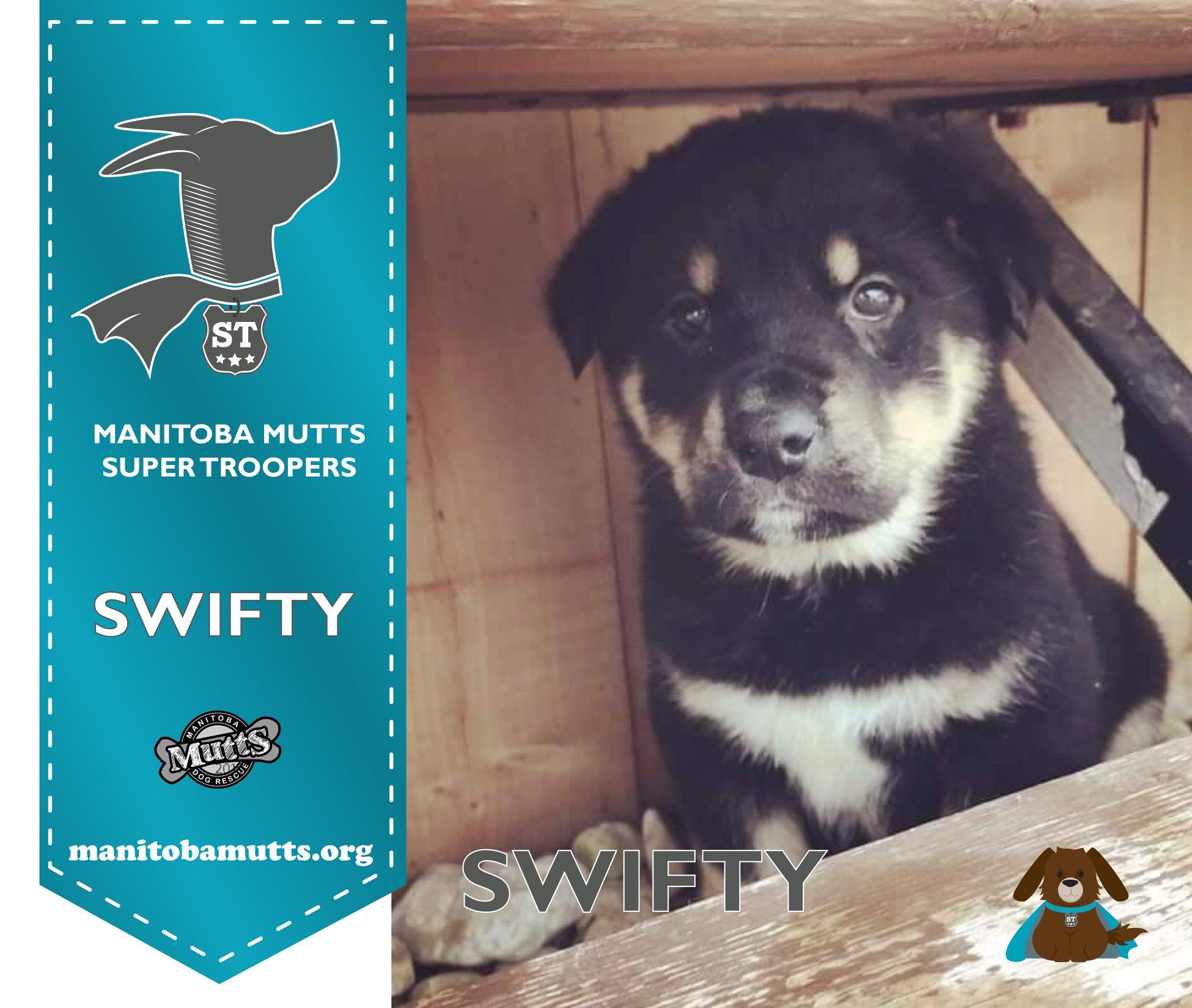 Swifty - Super Trooper