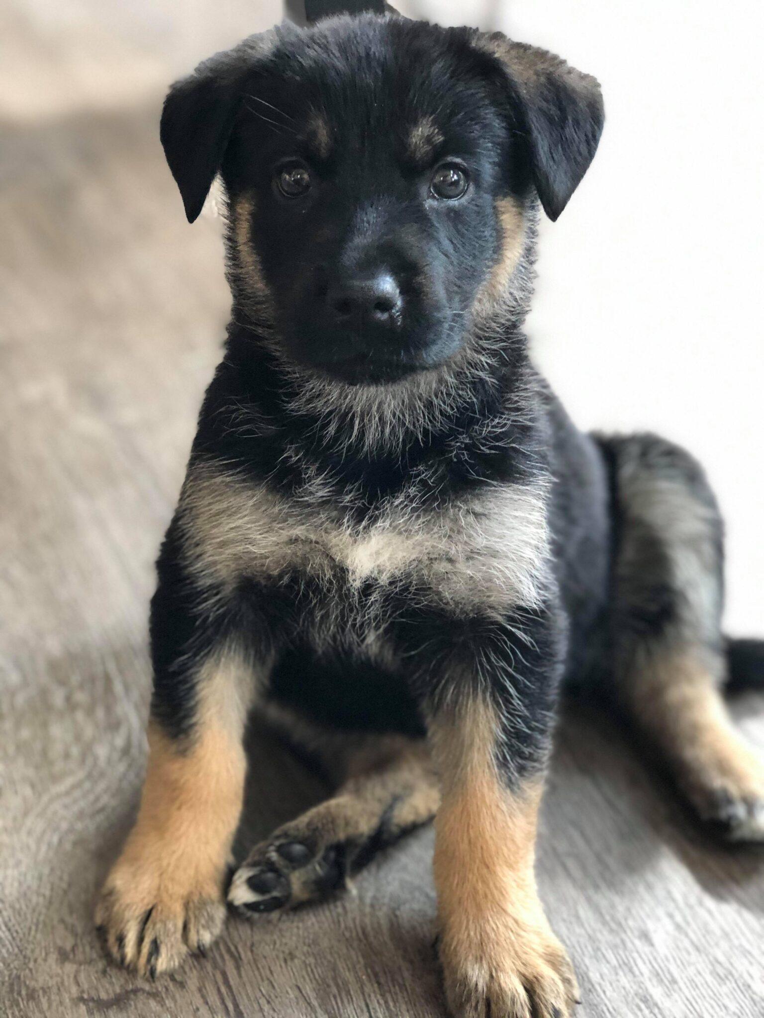 Markle - Manitoba Mutts Dog Rescue