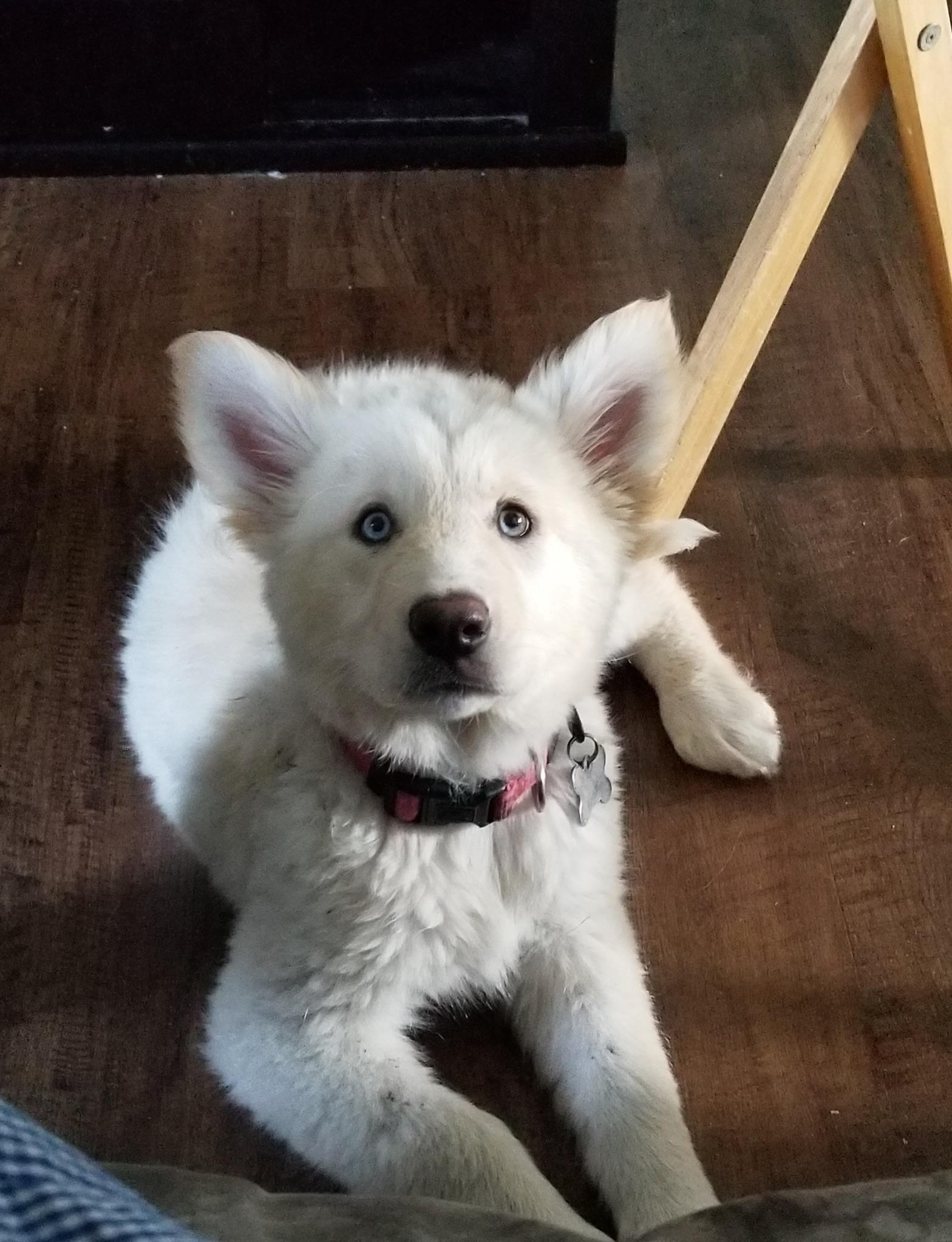 Gwen - Manitoba Mutts Dog Rescue