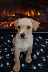 Alan - Manitoba Mutts Dog Rescue